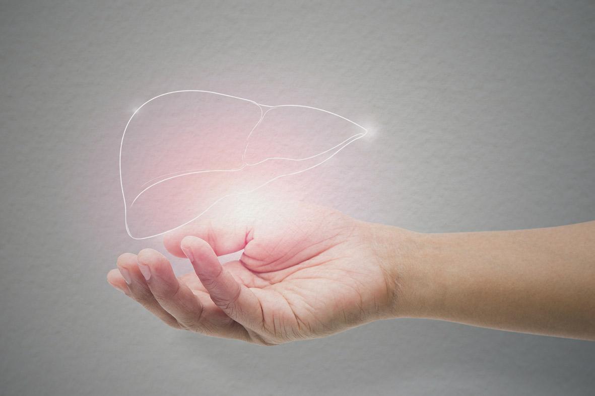 Über einer Hand schwebt eine holografische Leber. Thema: Leberzellkrebs