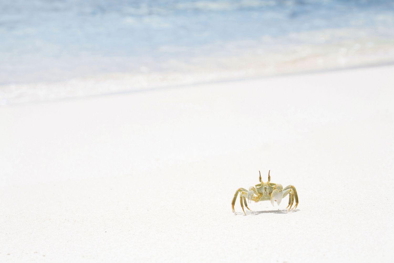 Ein Krebs im Sand. Thema: Volkskrankheit Krebs